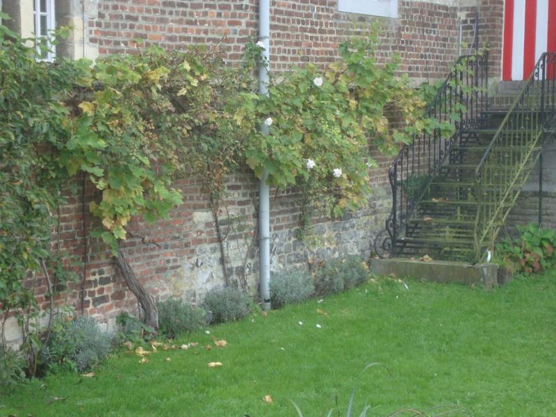 Taille rosiers en décembre et janvier... Dsc02013