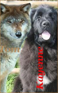Tom/Kayenne