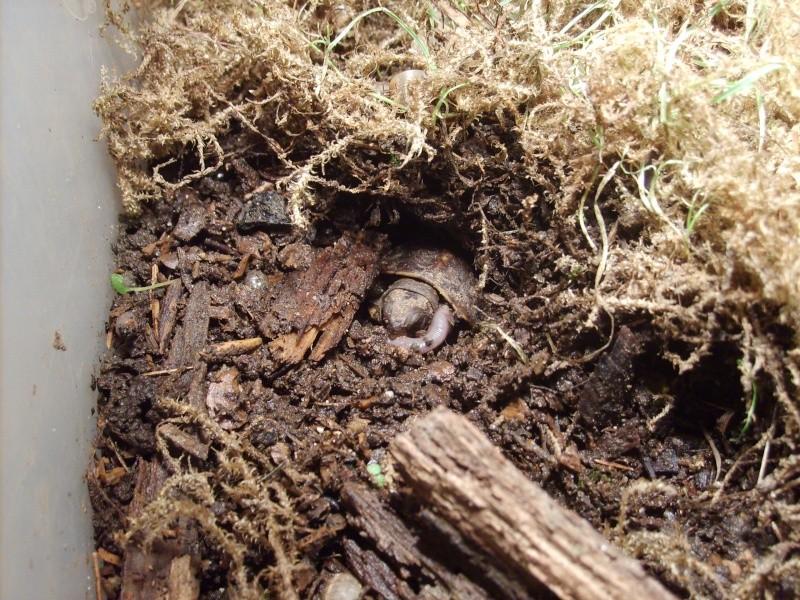 TCT : orgie de petites limaces grises - Page 2 20080910