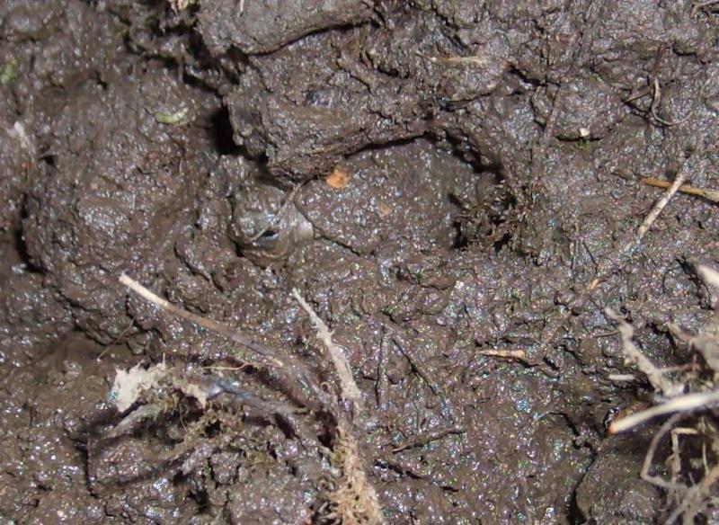 TCT : orgie de petites limaces grises - Page 2 20081210