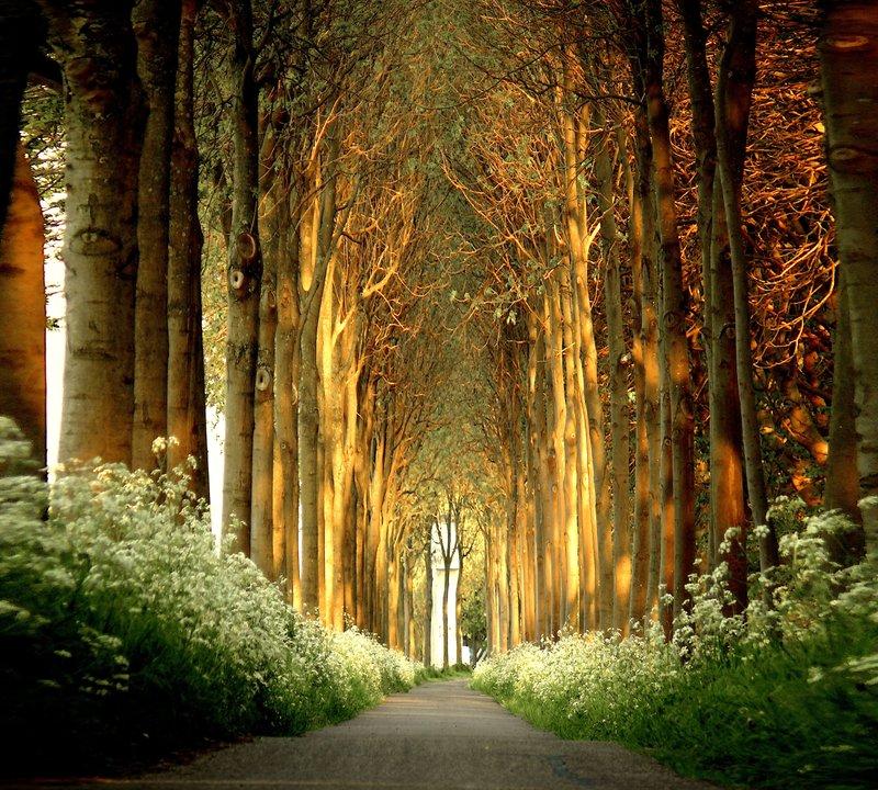 Храм Сокровенного Леса - Страница 3 S210