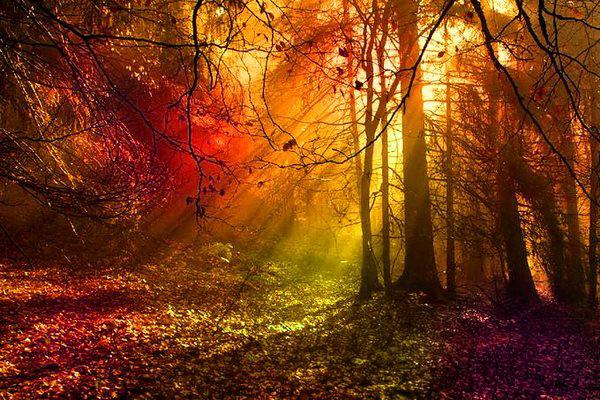 taches de couleurs Forest11