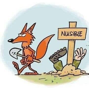 la chasse c'est un sport très ... - Page 5 78539810