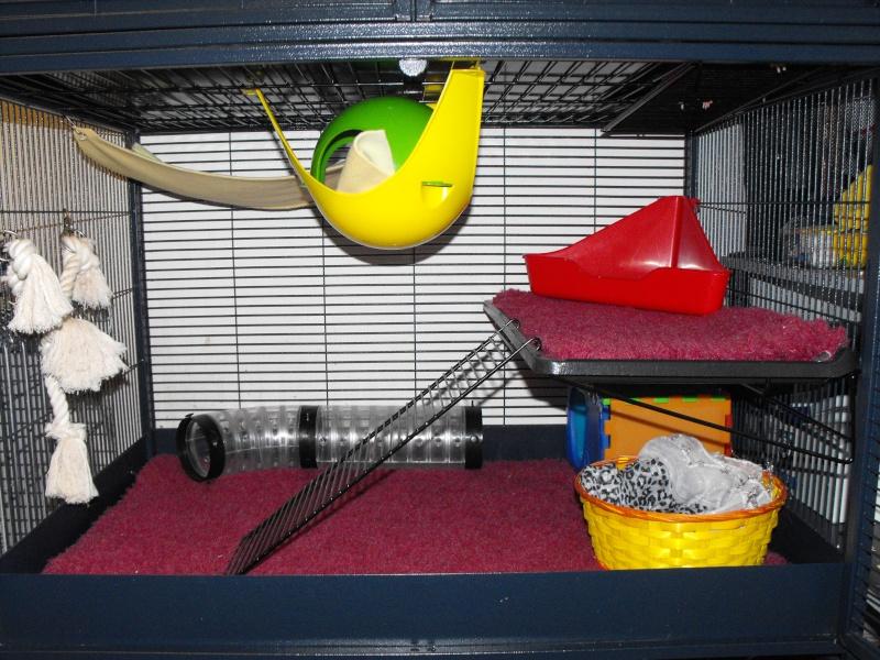 Photos de vos cages - Page 3 Dscf1711
