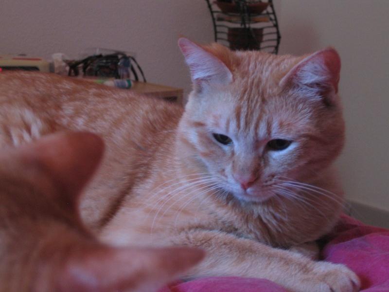 Garfield Img_5011
