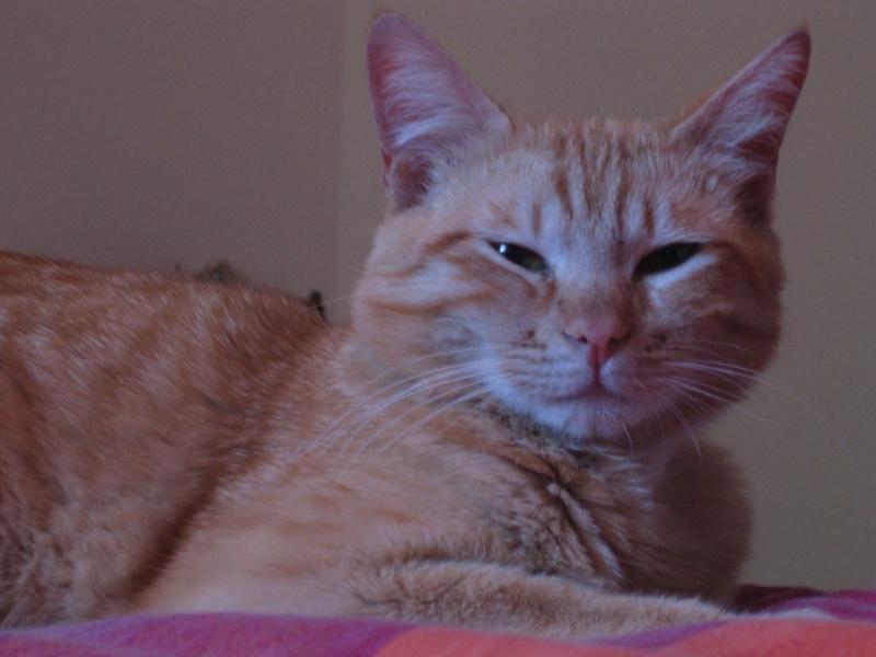 Garfield Img_5013