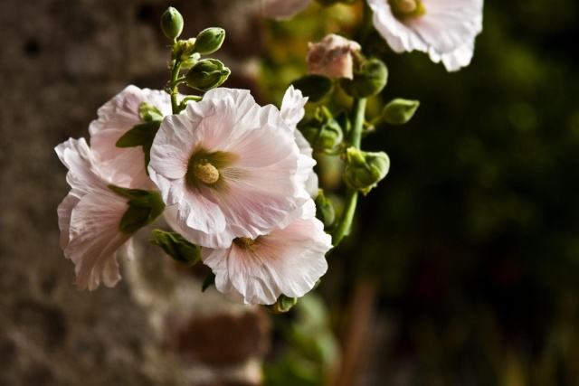 Pretty Flowers Img_0012