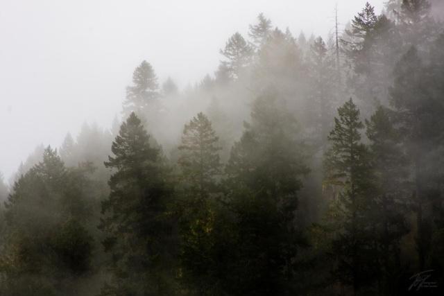 Morning Mist Img_2815