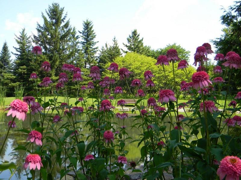 Le jardin botanique de Montréal Cid_1010