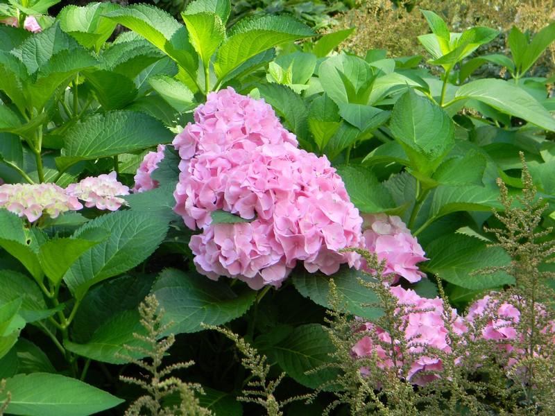 Le jardin botanique de Montréal Cid_9310