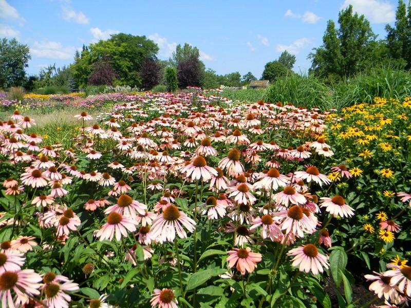 Le jardin botanique de Montréal Cid_fe10