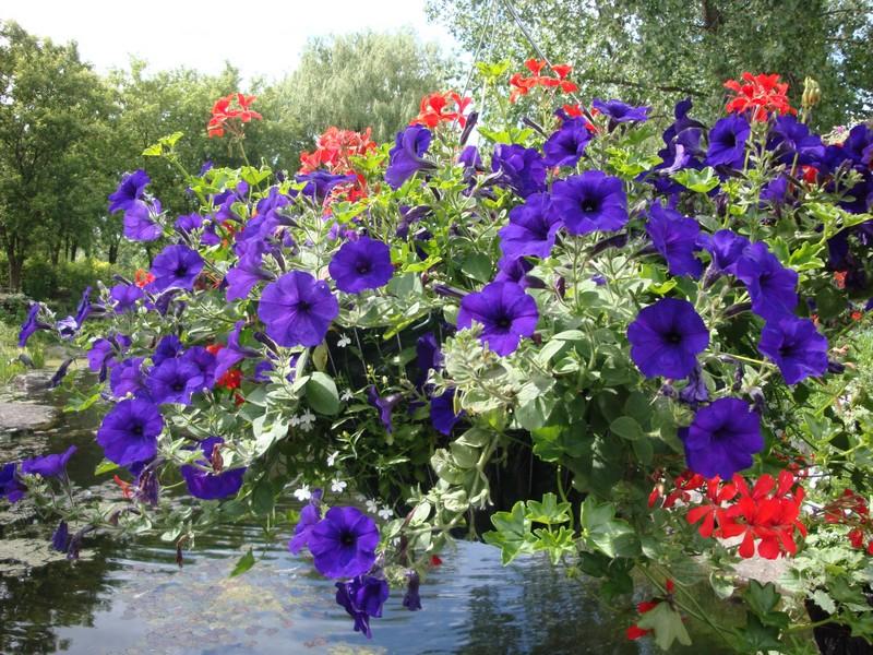 quelques fleurs; Dsc00310