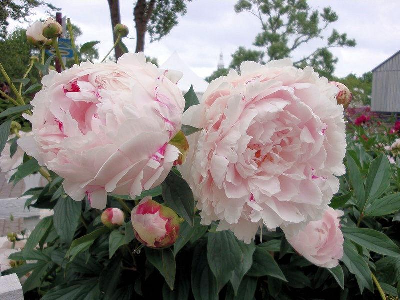 quelques fleurs; Dyn00310