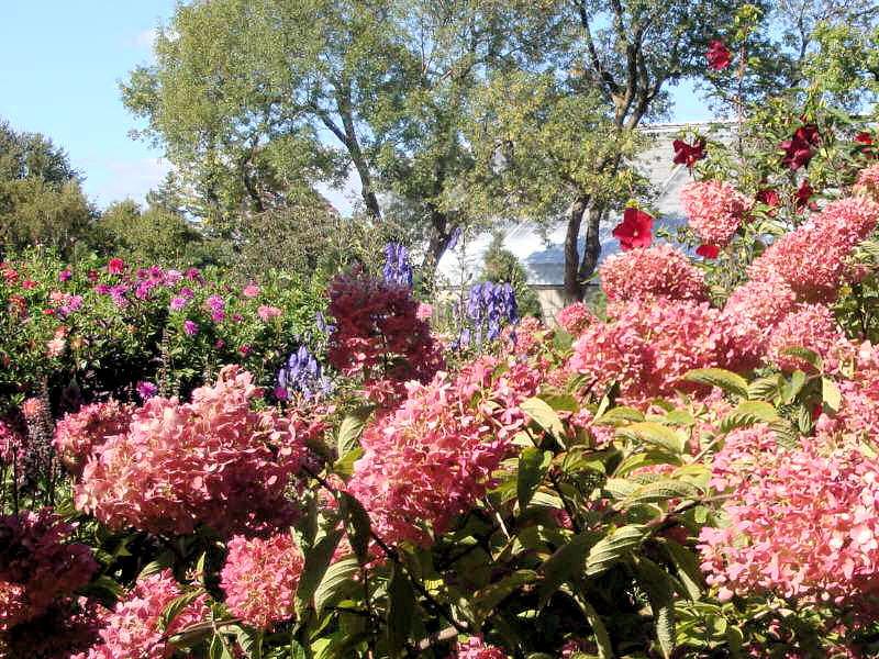 quelques fleurs; Photos10
