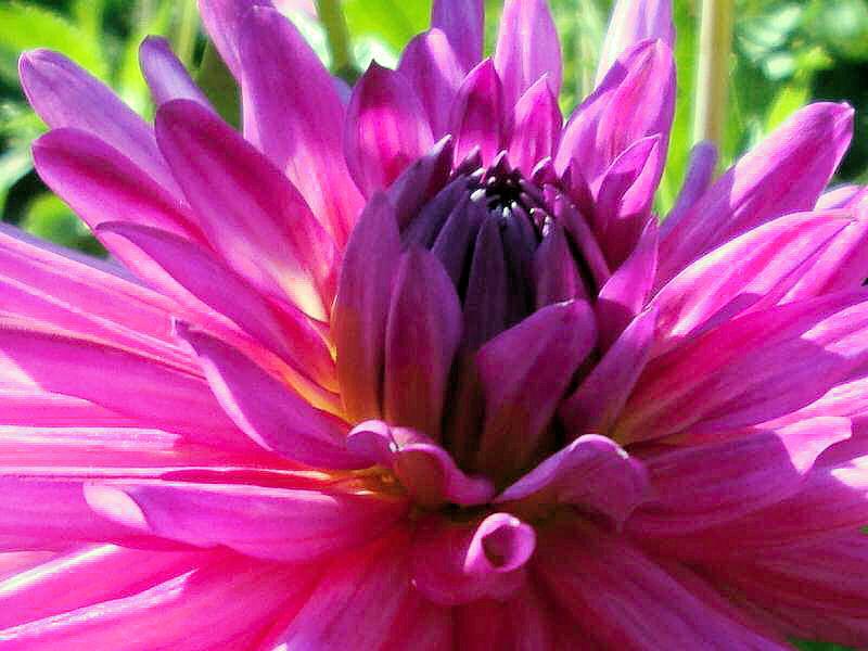 quelques fleurs; Photos11