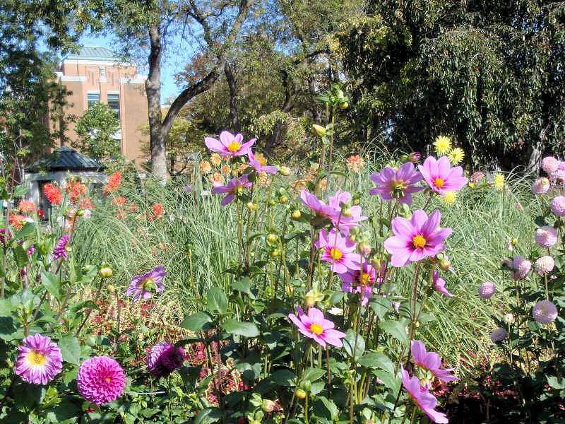 quelques fleurs; Photos14