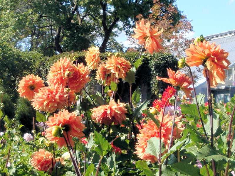 quelques fleurs; Photos15