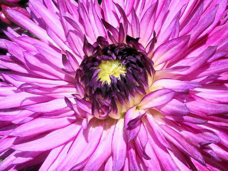 quelques fleurs; Photos17