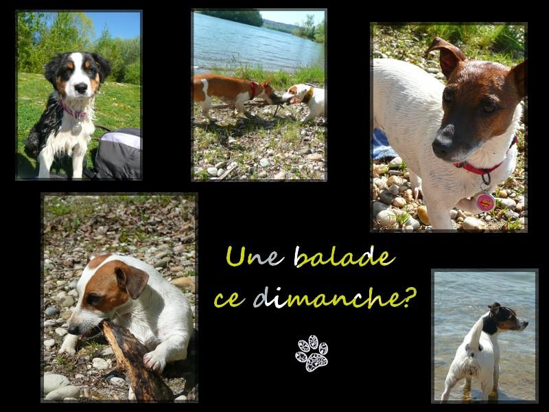 """Balade """"lyonnaise"""" le 8 mai 2011? Sans_t10"""