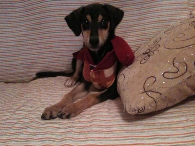 Lotus cachorrete de 4 meses busca hogar. Valencia. Lottus10