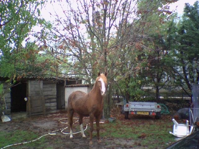 mon vieux cheval; Primo Photo_11