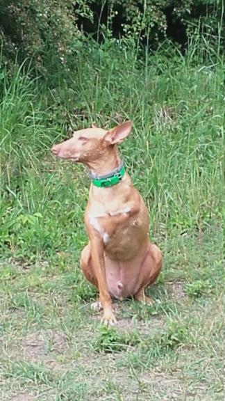 URGENCE LUKOIL - mâle croisé de taille moyenne, né environ en septembre 2017. (PASCANI) - REMEMBER ME LAND - ADOPTE PAR PHILIPPE (Belgique) - Page 2 20180510