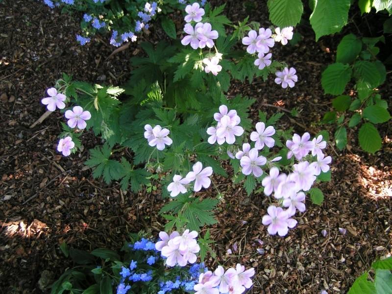 Des floraisons précoces cette années... Pict0043