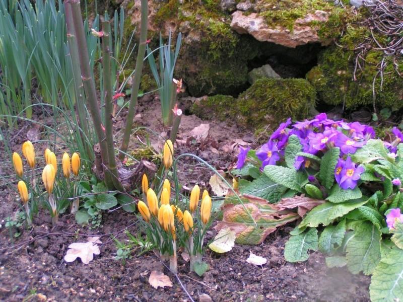 photos de mon jardin Pict0310