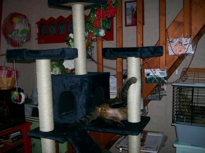 L'arbre à chat de Léo et Maya 000_0010