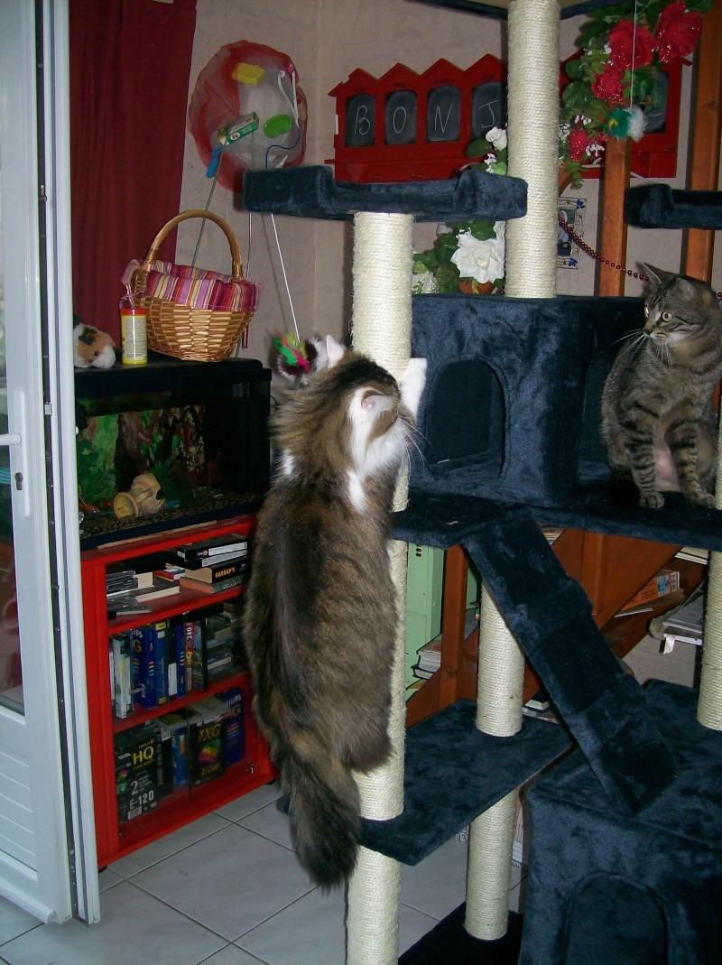 L'arbre à chat de Léo et Maya 000_0011