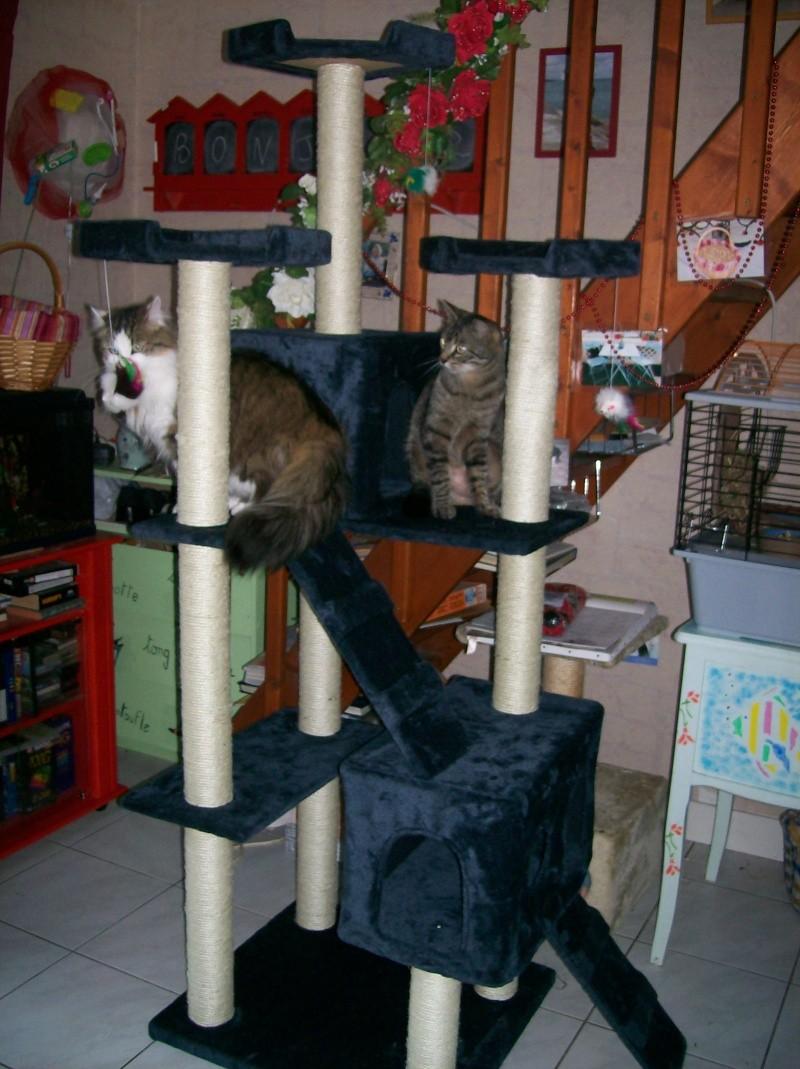 L'arbre à chat de Léo et Maya 000_0012