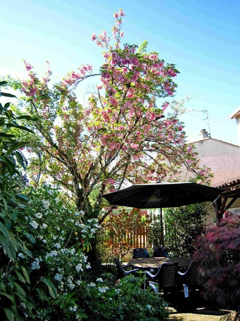 salon de thé (pour dire bonjour quand on passe !!) - Page 25 Img_0110