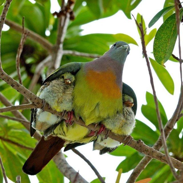 Les oiseaux - Page 2 Oiseau10