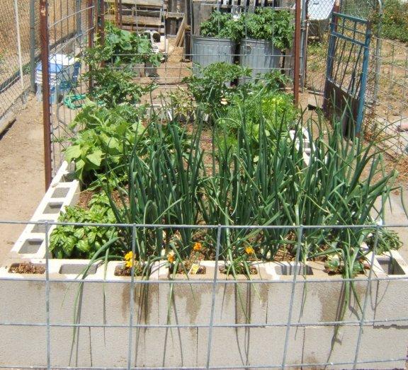 My new garden and helpers Garden12