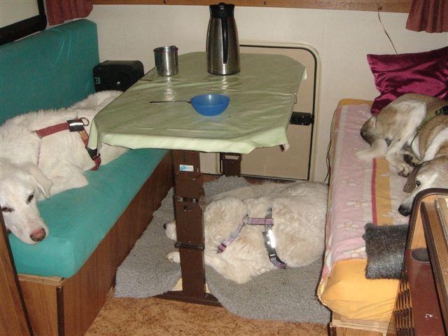Riesenbaby Pupo verwandelt sich in Liam - vermittelt Dsc04813