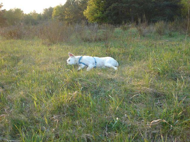 Riesenbaby Pupo verwandelt sich in Liam - vermittelt Dsc04913