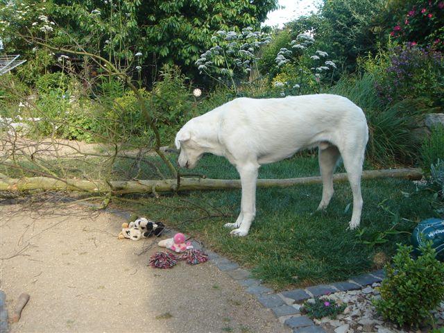 Riesenbaby Pupo verwandelt sich in Liam - vermittelt Dsc04924