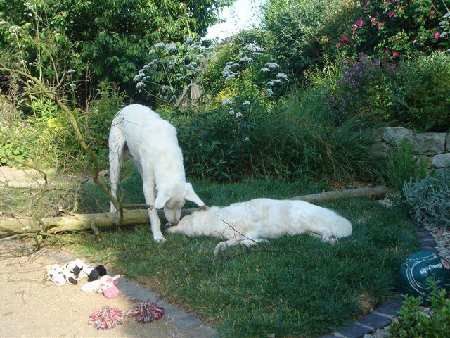 Riesenbaby Pupo verwandelt sich in Liam - vermittelt Dsc04926