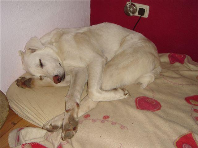 Riesenbaby Pupo verwandelt sich in Liam - vermittelt Dsc05012