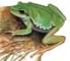 Anfibios Autóctonos en general