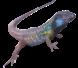 Reptiles Autóctonos en general