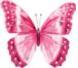 Lepidópteros del mundo