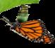 Cria y cuidados de los Lepidopteros