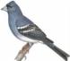 Aves Autóctonos en general