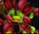 Plantas Carnivoras en general