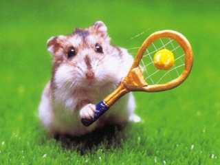 hamster culture Hamste17