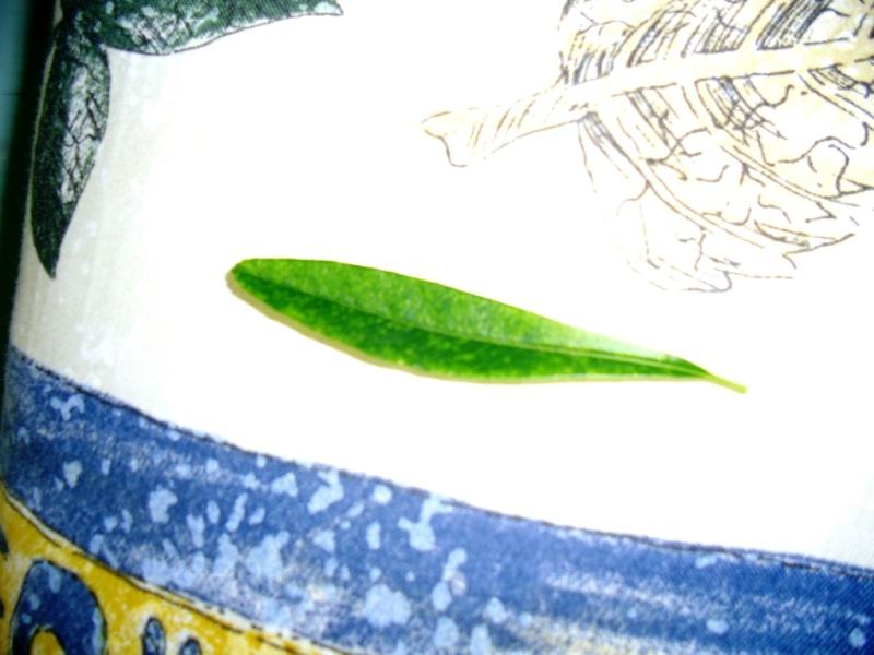 Lanugine su Pyracantha Cimg0119