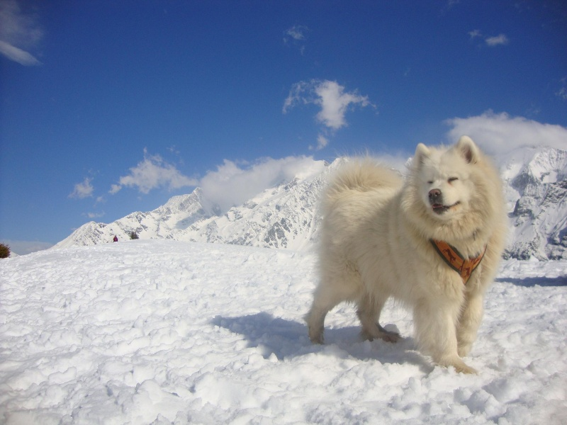 Nos loups grandissent, postez nous vos photos - Page 5 Dsc01310