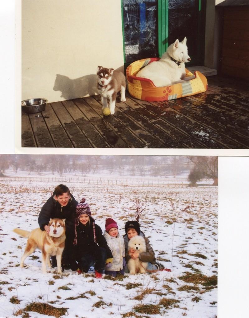 Nos loups grandissent, postez nous vos photos - Page 5 Img09010