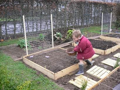 Jardin en carrés P1010510